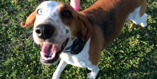 Kendall Circle Dog celebrity